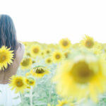 Best Sunflower Fields in DC Maryland Virginia