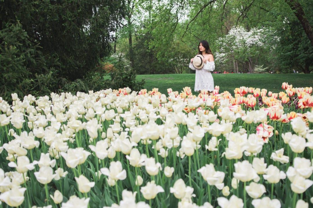 tulip fields washington dc