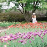 Where to See Tulip Fields in Washington DC