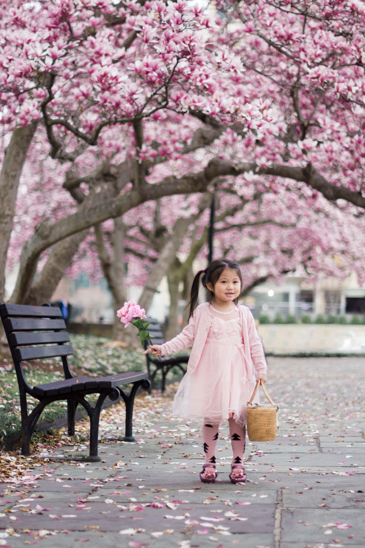 cherry blossom mini session