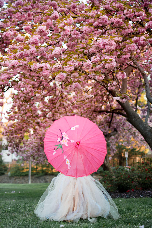 DC Cherry Blossom Photo mini session