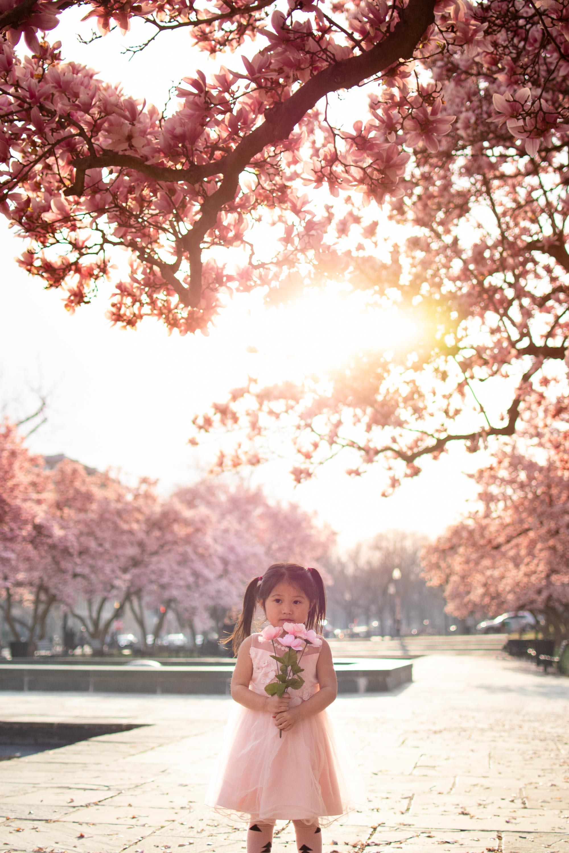 DC Cherry blossom photos