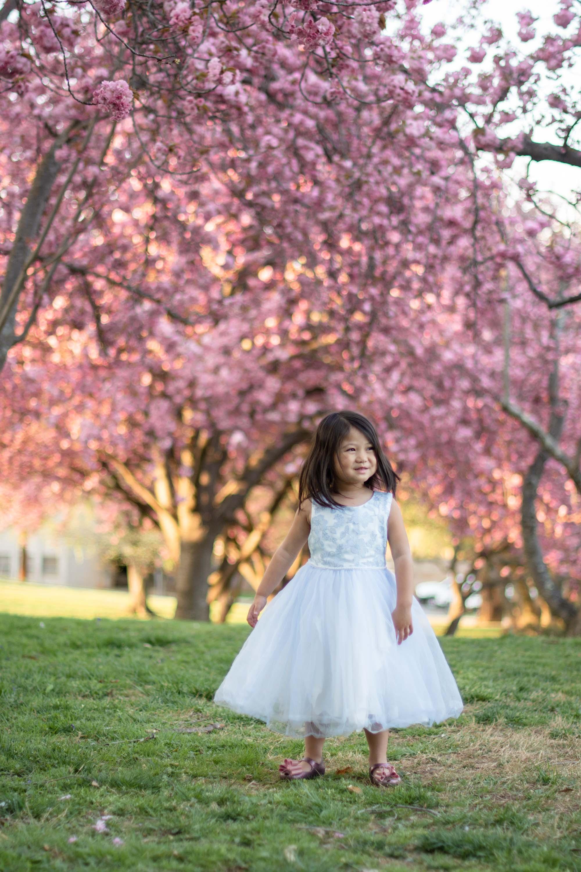 Maryland cherry blossom photos