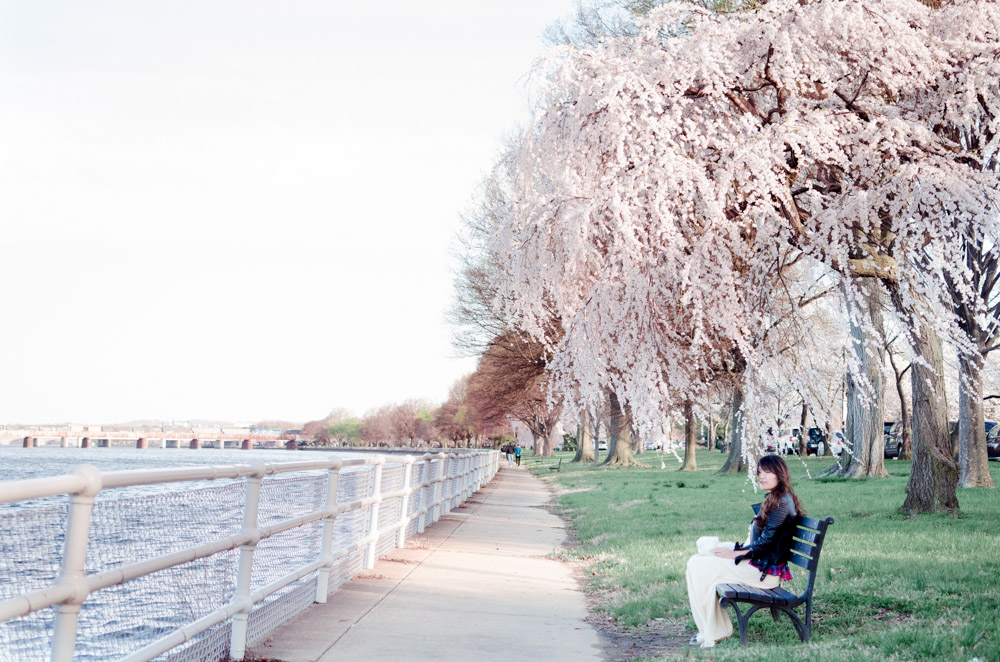 Transportation How to Get to Cherry Blossoms at the Tidal Basin