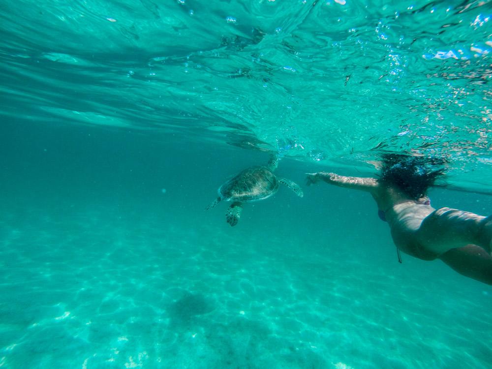 swim with sea turtles cancun