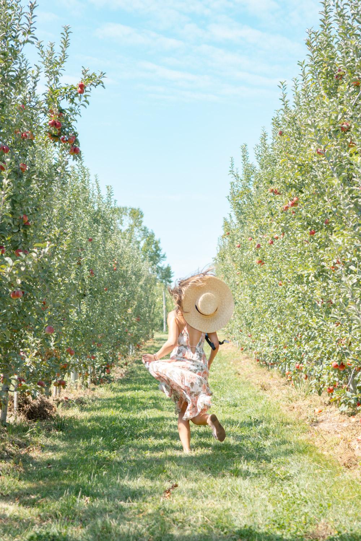 apple picking dc