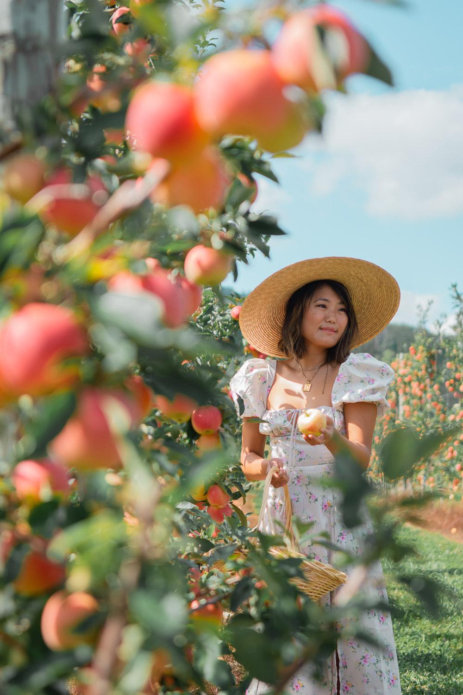 apple picking maryland