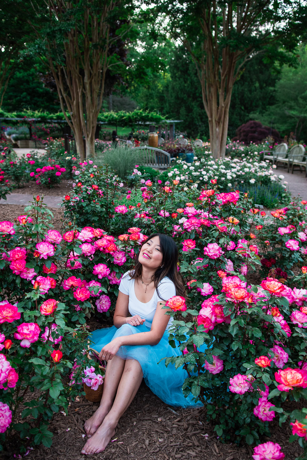 roses at brookside gardens