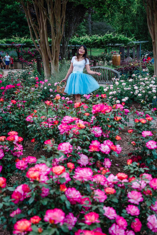 brookside garden roses