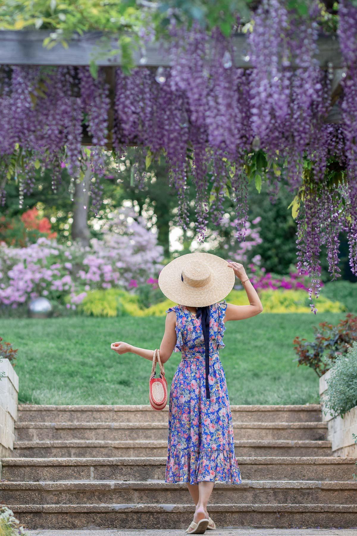 brookside garden wisteria