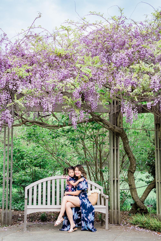 brookside gardens wisteria