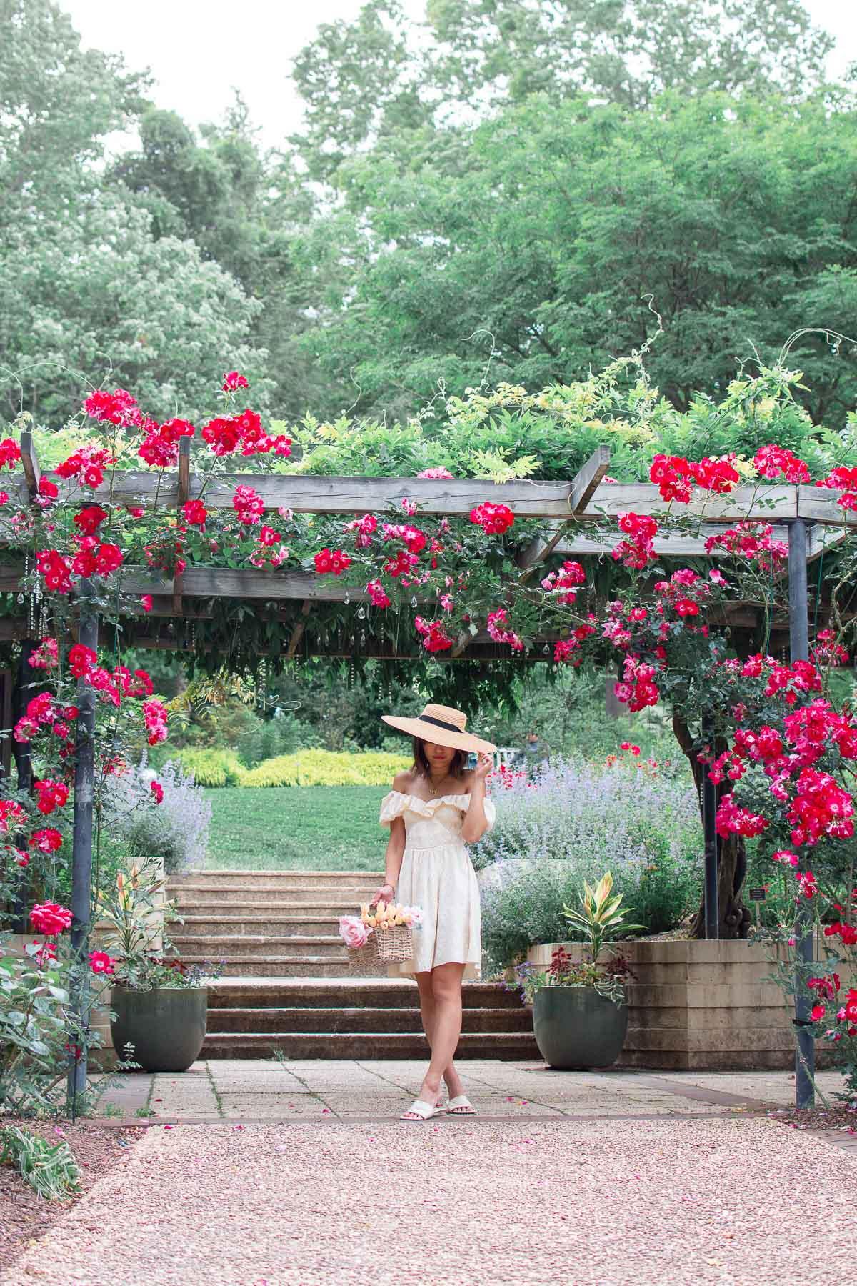 brookside gardens roses