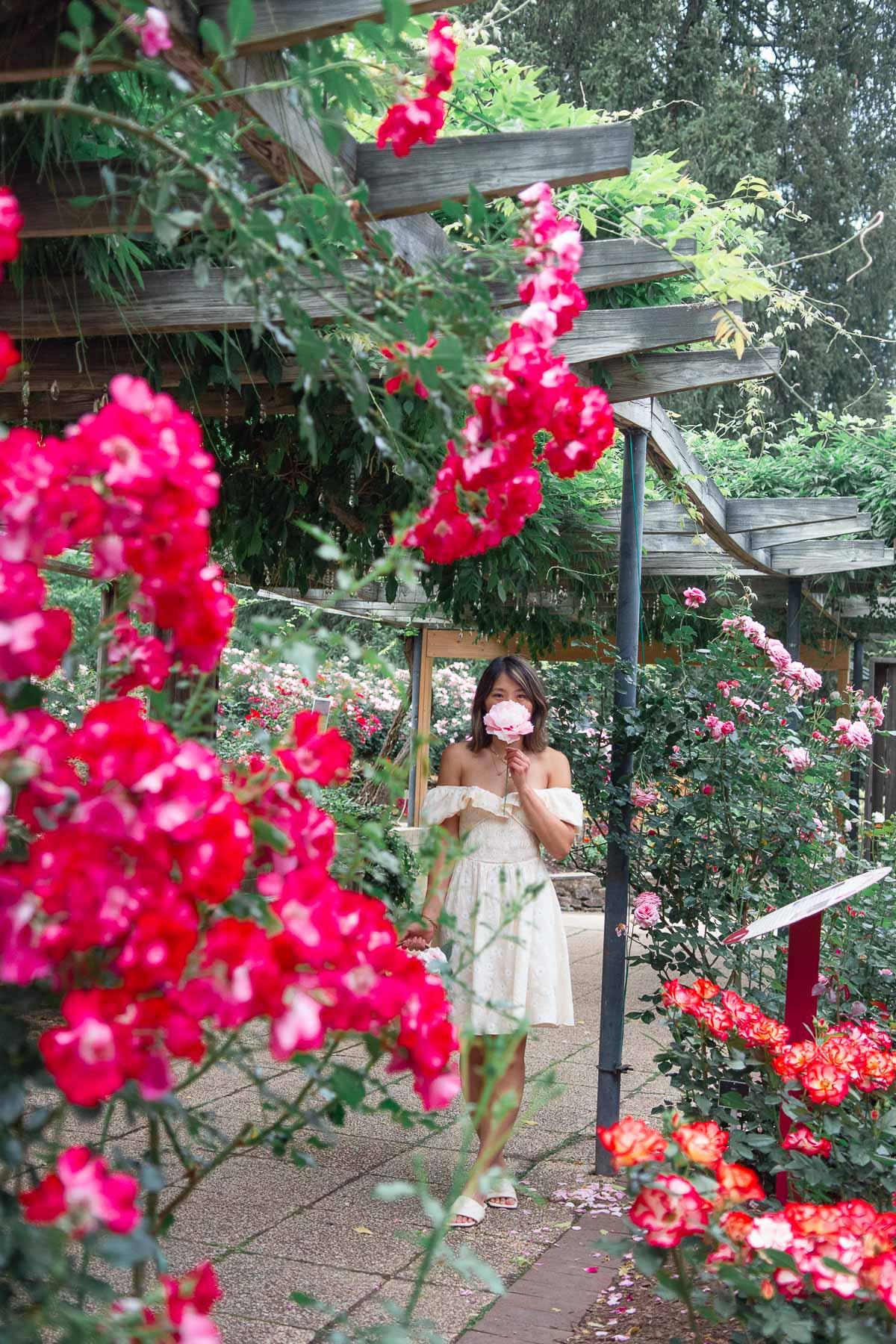 washington dc rose garden