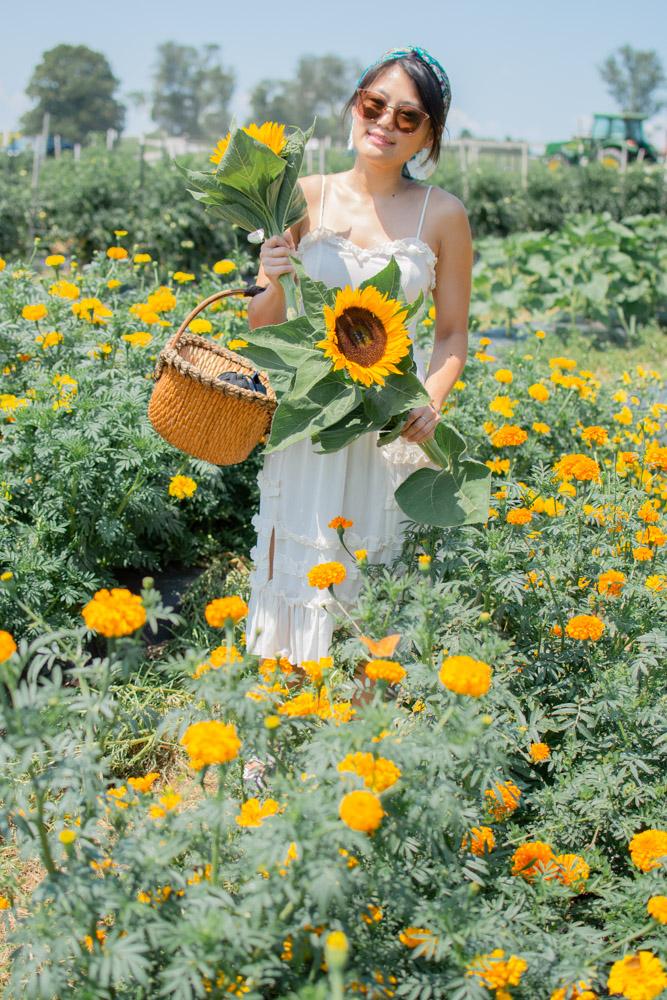 flower picking maryland