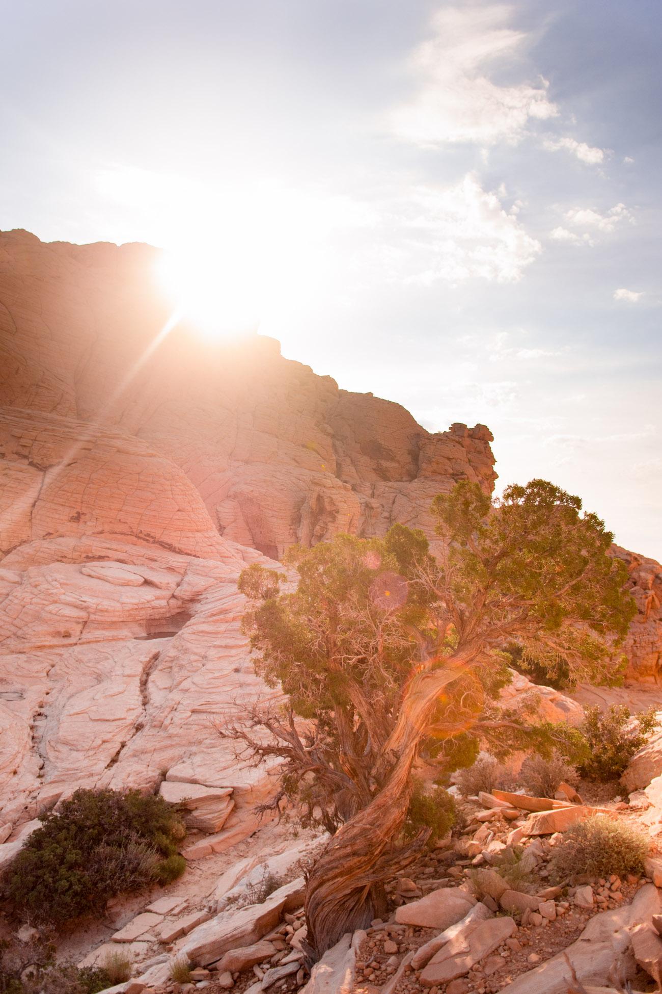 solo travel rock rock canyon