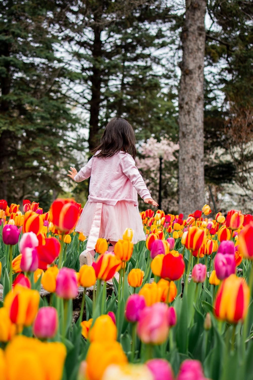 montreal tulips