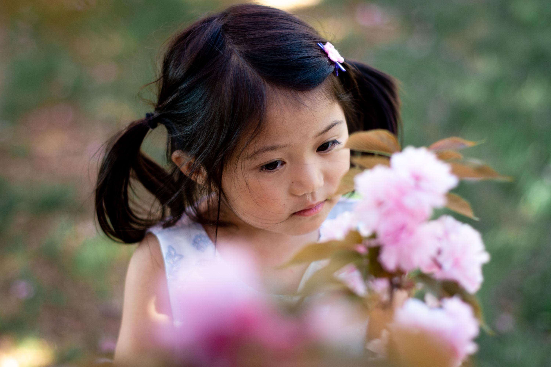cherry blossom family photo session dc
