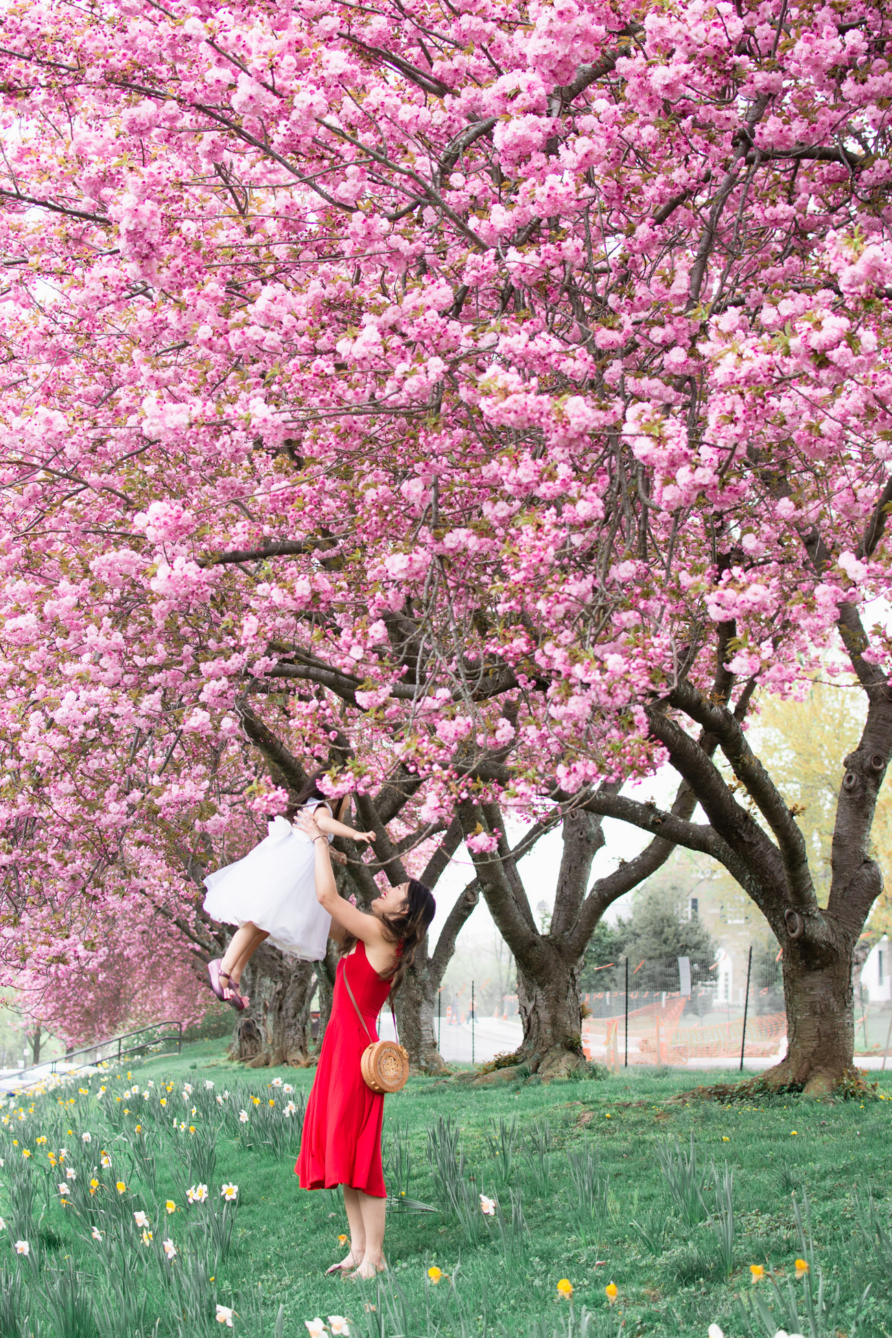 flowers dc cherry blossoms