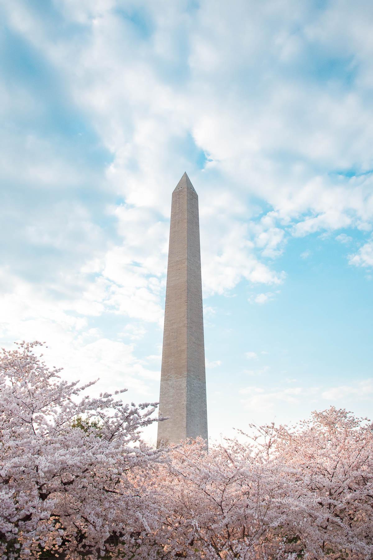 cherry blossom peak bloom dc 2021