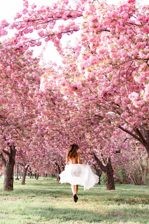 cherry blossom photo session dc