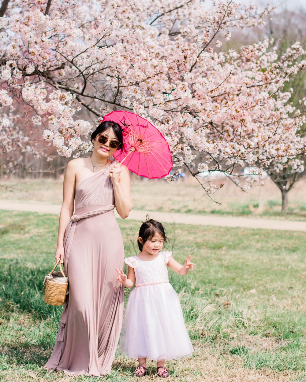 cherry blossoms national arboretum