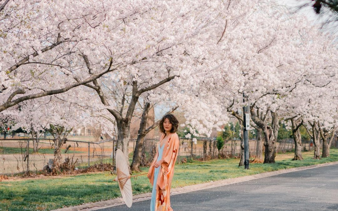 5 Secret Places to See Cherry Blossoms in Washington DC Like a Local without the Crowds