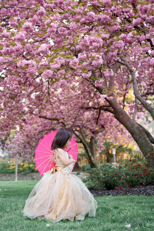 cherry blossoms washington dc photos