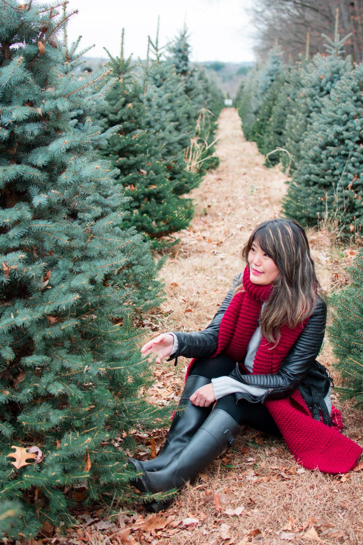 christmas tree farm washington dc