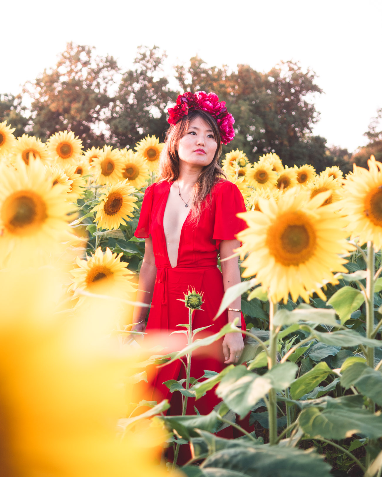 jerrettsville sunflowers