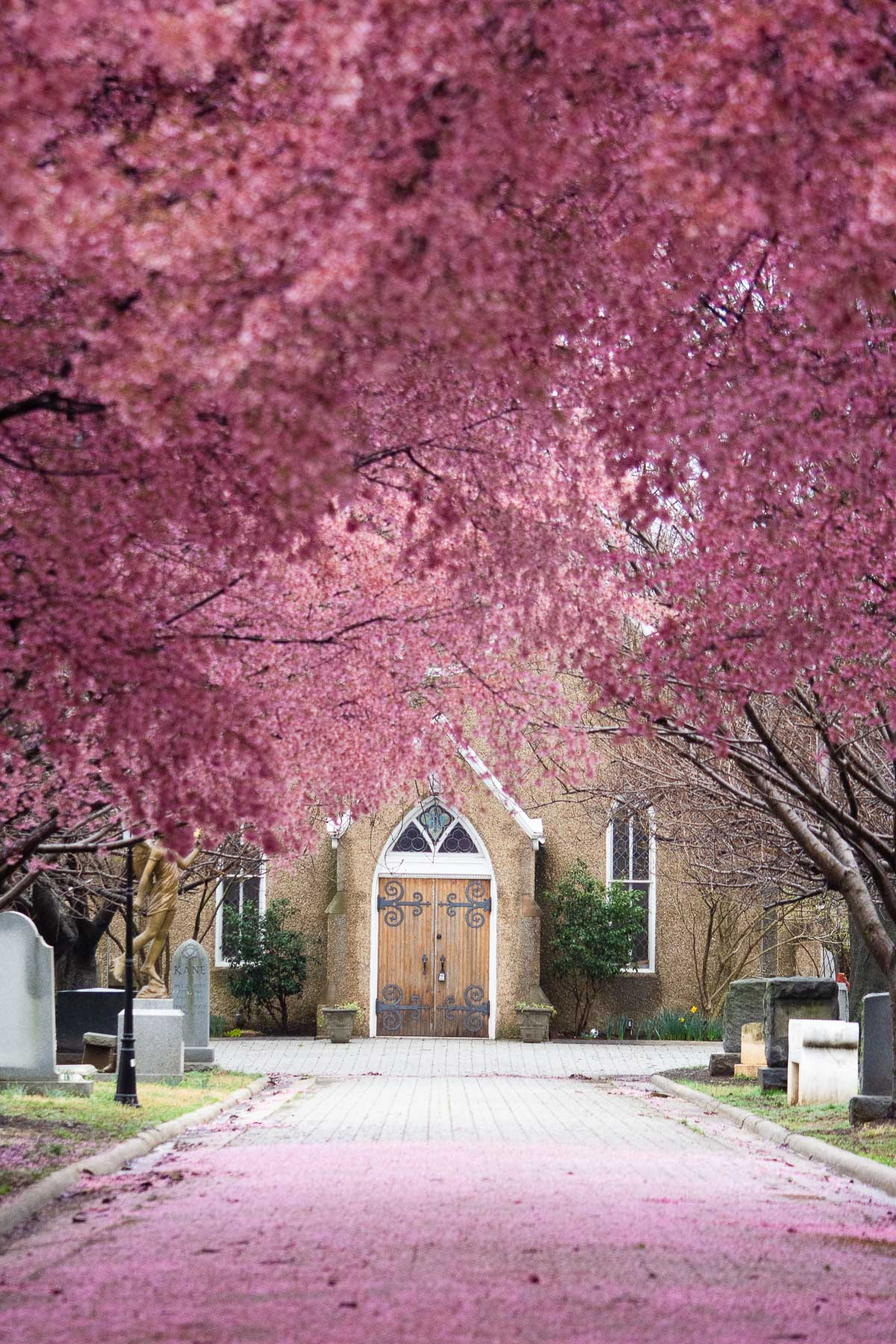 congressional cemetery blossoms