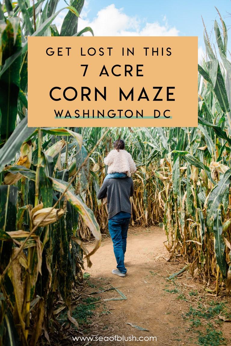 corn maze dc maryland