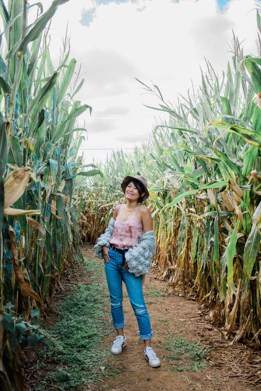 corn maze maryland