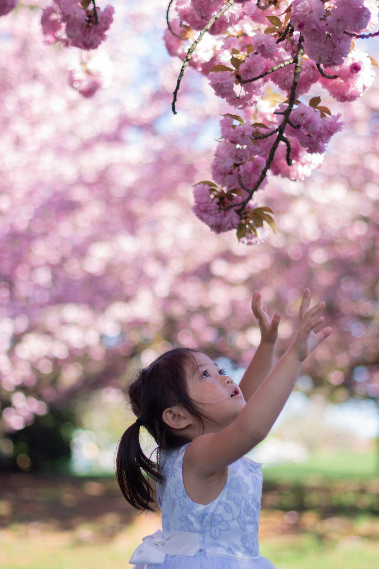 dc cherry blossom mini session