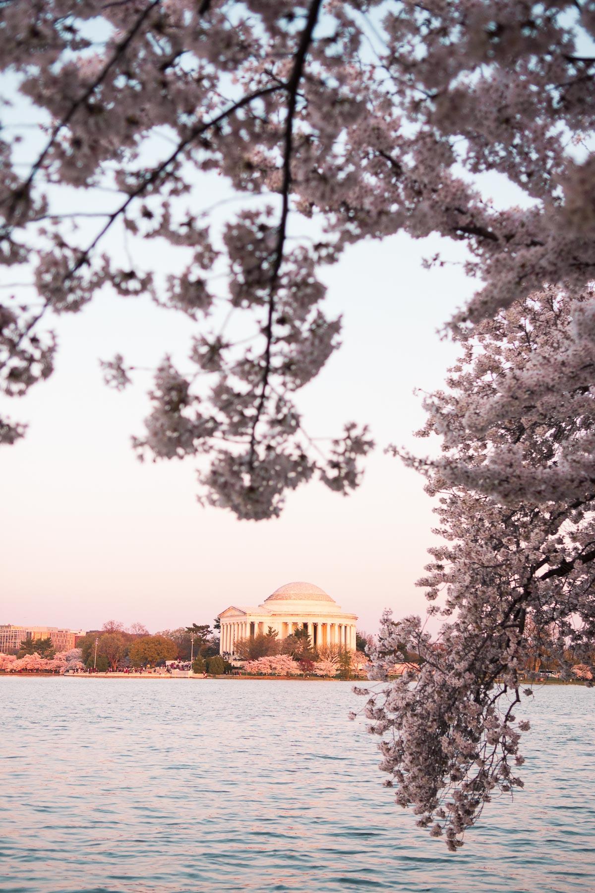 dc cherry blossom peak