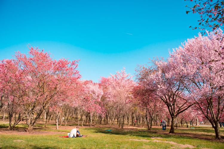 dc garden national arboretum
