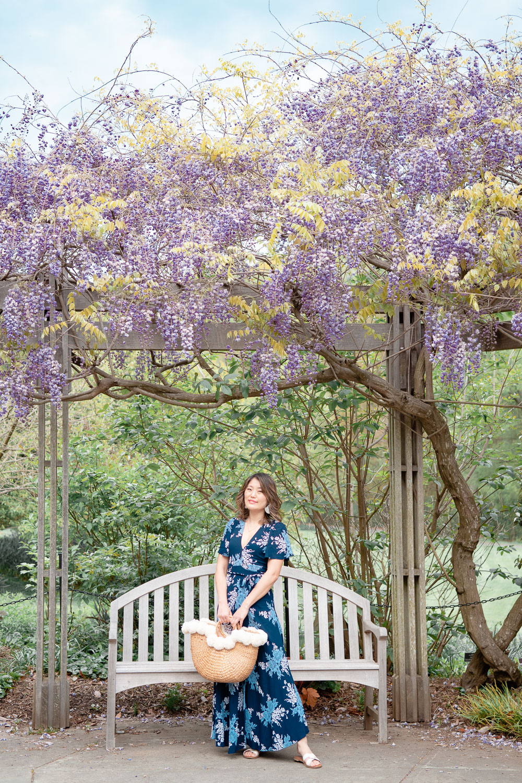 dc wisteria