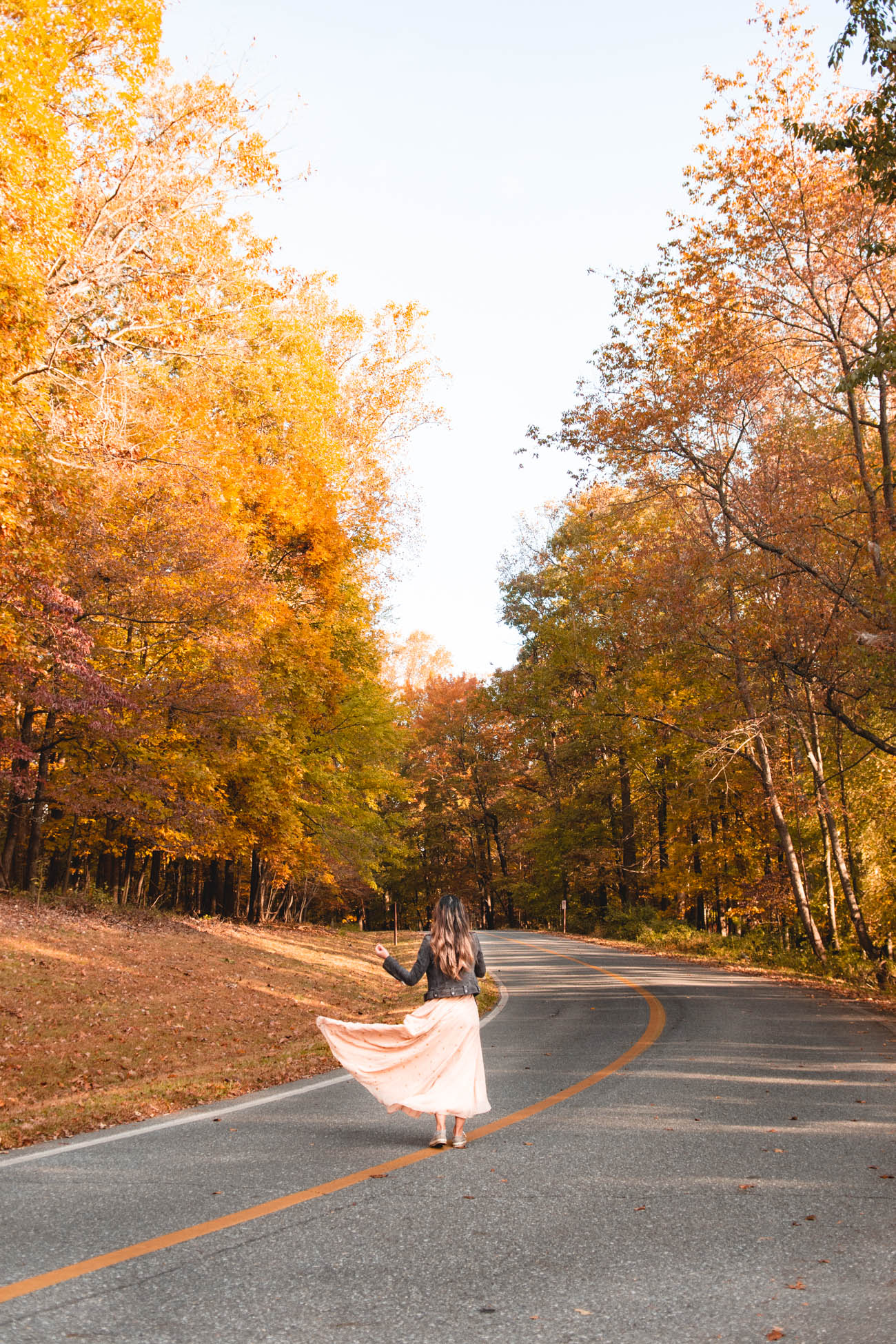 fall foliage in dc best photo spots