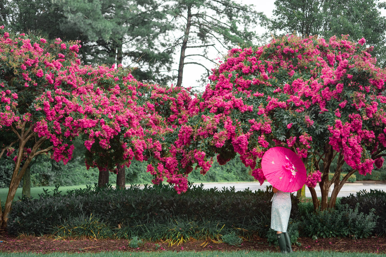 flowers dc crepe myrtle