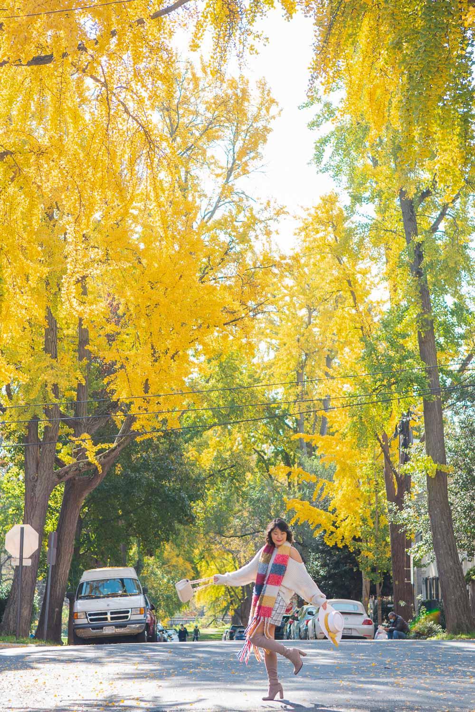 ginkgo trees dc