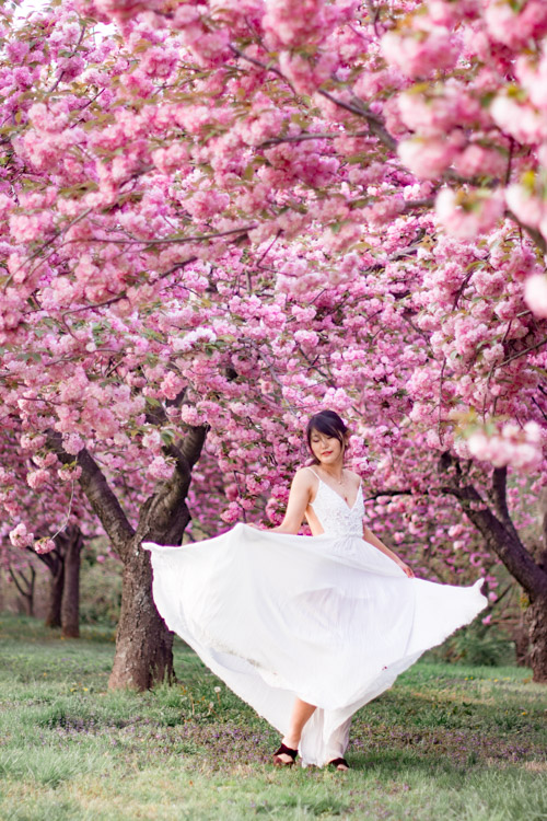 Cherry Blossoms Dc 2019 Insider S Guide Everything You Need To Know