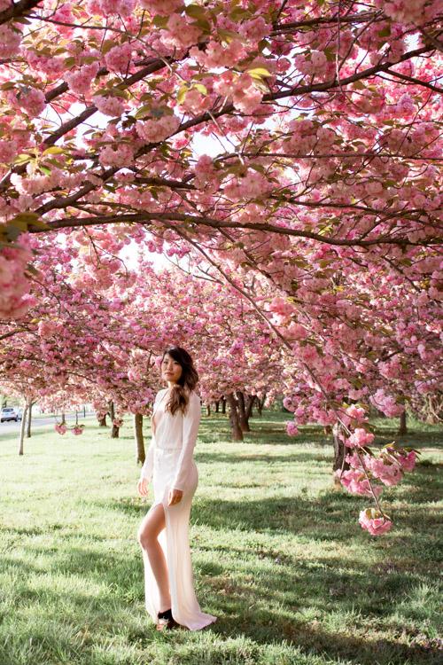 washington dc cherry blossom photo session