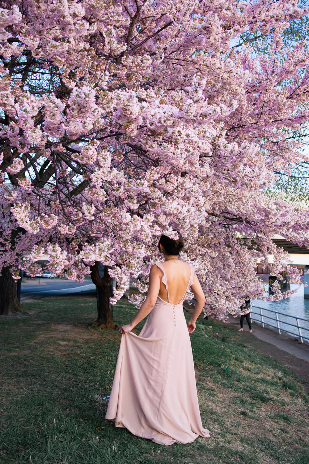 best places to take pictures of cherry blossoms in dc