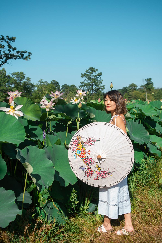 kenilworth lotuses