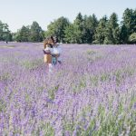 The Perfect Day Trip from New York Lavender by the Bay