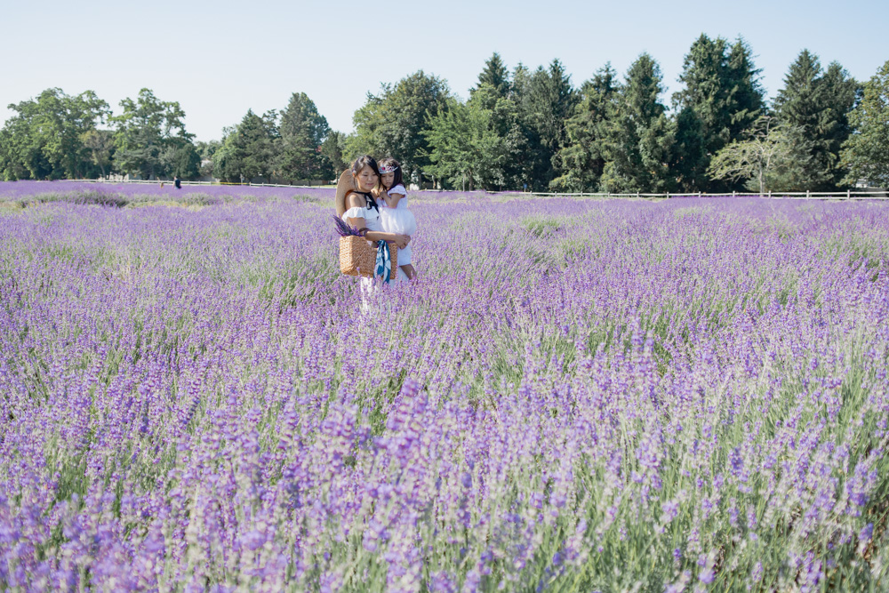 Lavender Farm on Long Island Driving Distance from Virginia, Maryland, and DC