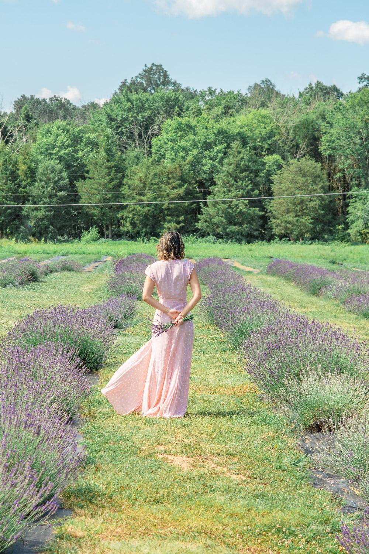 lavender farm in virginia