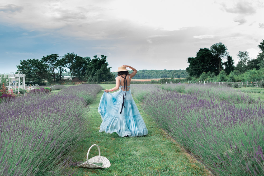 This Lavender Farm in Maryland is in Full Bloom: Purple Rain Lavender Farm