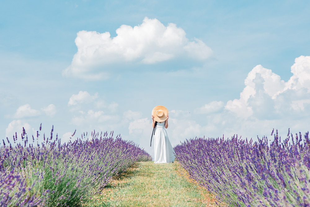 lavender farm maryland