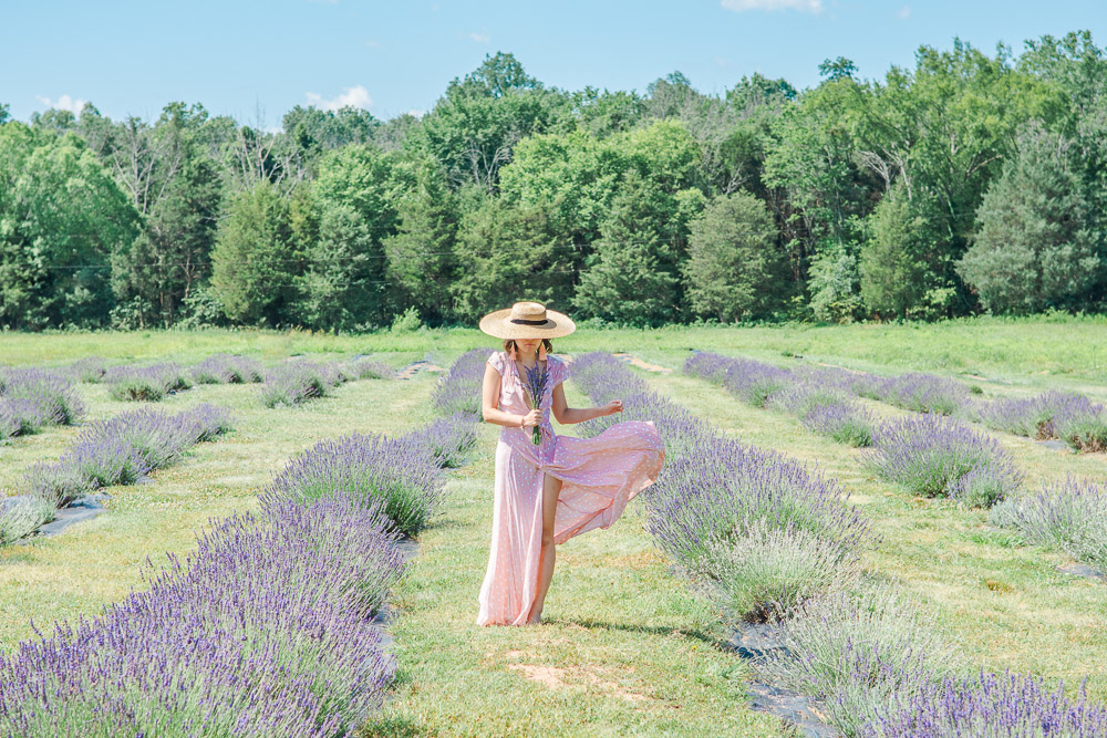 Lavender Farm in Virginia is in Full Bloom!