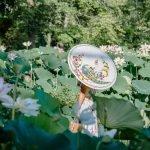 Thousands of Lotuses Bloom in Washington DC at Kenilworth Aquatic Gardens
